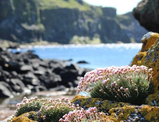 Discover Mull & The Small Isles | Twin Cabin