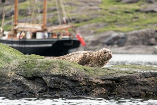 Bessie Ellen moored next to seal in Scotland