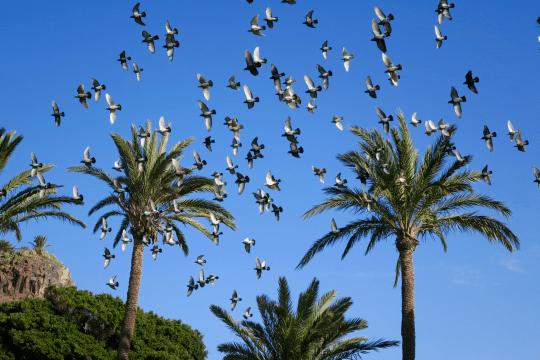 Birds in canaries winter sun