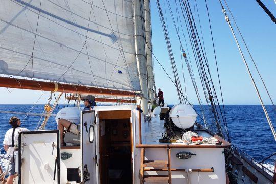 Blue Clipper Sailing