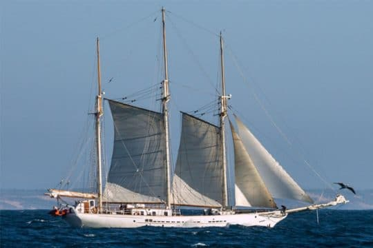 Blue Clipper full Sail