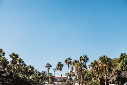 Canaries blue sky
