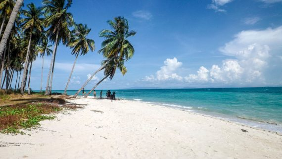 Caribbean Palm tree beach