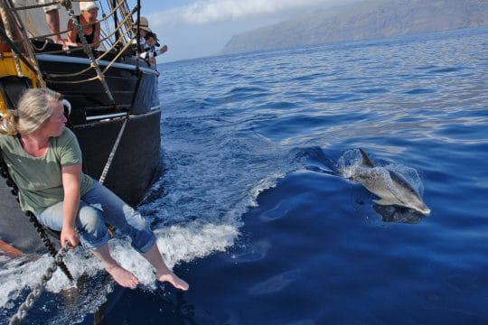 Dolphins surfing Bessie Ellen's bow wave in the Canaries