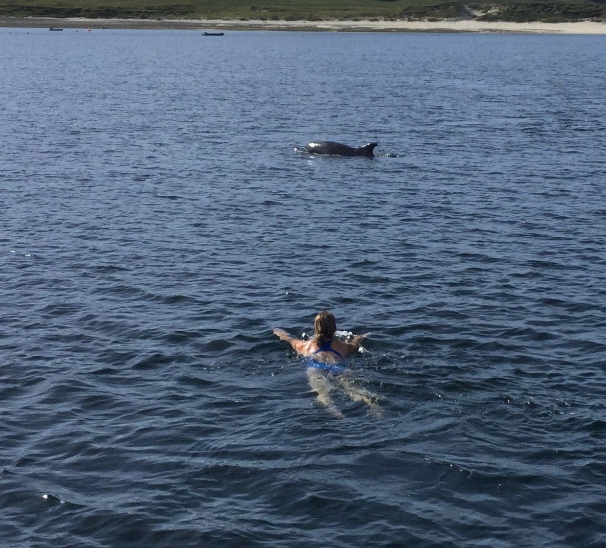 Swimming with whales on Zuza