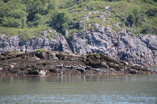 Seals in scotland