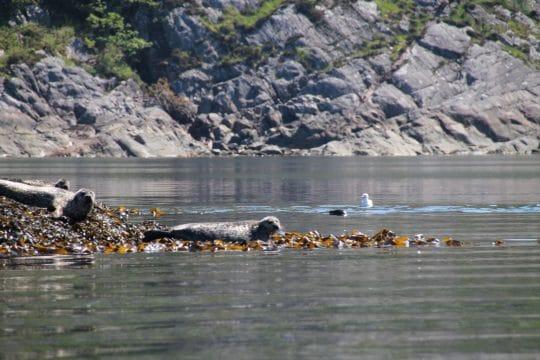 zuza seals scotland