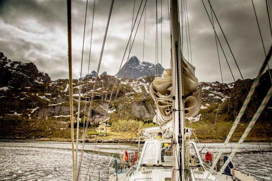 Narwhal Bodo Tromso Norway