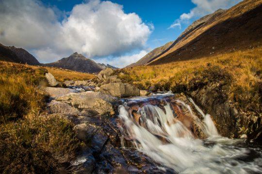 Narwhal Scotland