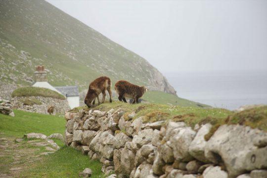 Narwhal St Kilda