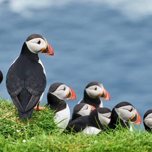 Explore the Outer Hebrides under sail