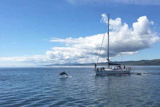 Stravaigin dolphins motoring