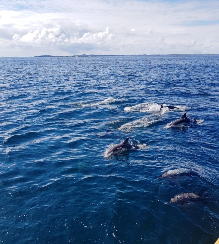Hebrides dolphins from Bessie Ellen